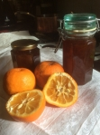 Marmalade Oranges